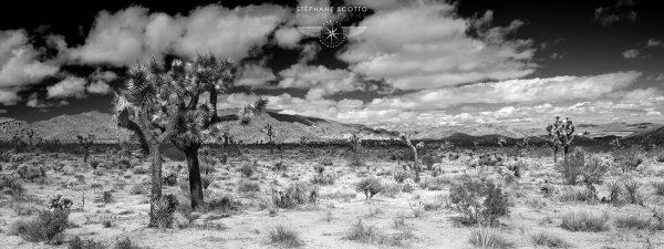 Joshua Tree photograph