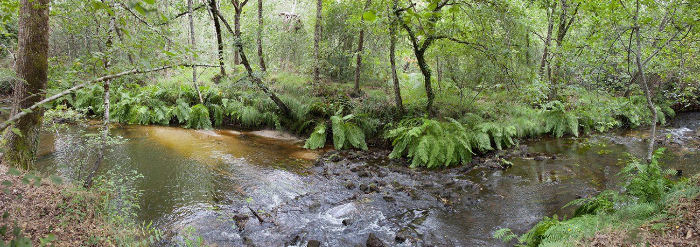 riviere de la Leyre
